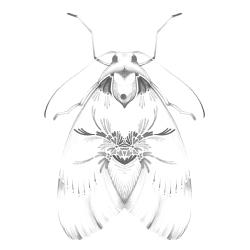 mariposa_para_site